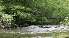 Appalachian Stream 7 - stock footage
