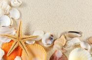 Stock Photo of seashells group