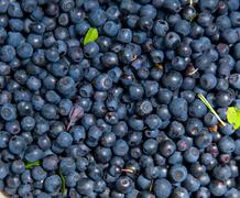bilberry background - stock photo