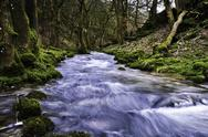Stock Photo of river flowing through mossy woodland