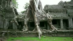Huge tropical banyon tree covers preah khan temple, angkor, cambodia Stock Footage