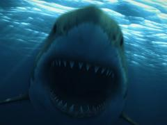 Great White Shark 10 720x480 Night Stock Footage