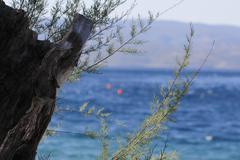 Old tree stump on the beautiful sea Stock Photos