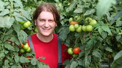 Smiling Worker Picking Tomatos Stock Photos