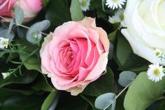 single pink rose - stock photo