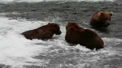 The Three Bears Stock Footage