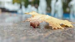 Autumn season is begining Stock Footage