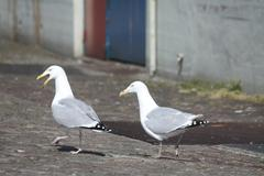 Couple of sea gulls Stock Photos