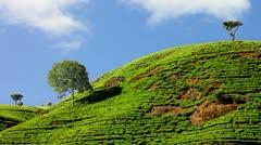 Sri Lanka tea garden mountains in nuwara eliya Stock Footage