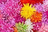 Plastic flowers, chrysanthemum Stock Photos