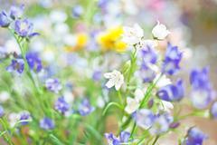 Plastic flowers, wild chrysanthemum Stock Photos