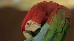 Parrot bird Stock Footage