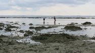 Stock Video Footage of people gathering oyster during low tide
