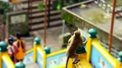 Monkeys in batu cave temple in malaysia Stock Footage