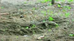 Lizard in forest Stock Footage