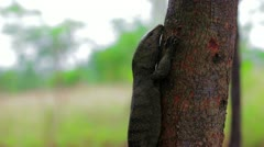 Lizard in forest Stock Footage