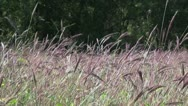 Stock Video Footage of Tall Grass Meadow 2