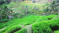 Tegalalang rice terrace, bali, indonesia Stock Footage