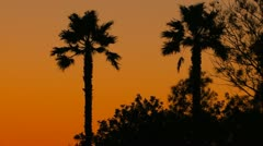 Tropical sunset background with palm trees - stock footage
