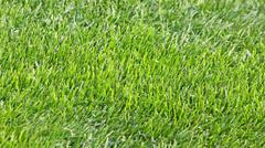 Green grass soccer field - stock photo