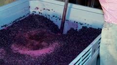 "Winemaking. Mixing ""cap"" of  grape skins. Stock Footage"