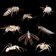 Animal hyönteinen bug Kuvituskuvat
