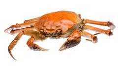 Red crab Stock Photos