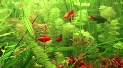 Aquarian fish Stock Footage