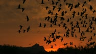 Stock Video Footage of Birds Fly Mountain Sunset