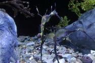 Ocean seahorses swimming underwater near bottom Stock Footage