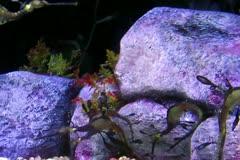 Ocean seahorses swimming underwater Stock Footage