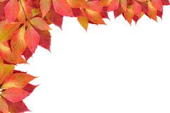Stock Photo of autumn leaves