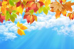 autumn leaves against the sky - stock photo