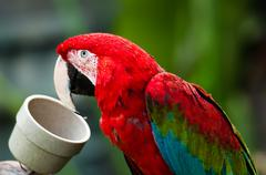 Parrot eating from a bowl Stock Photos