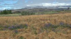 \Greenland Narsarsuaq vegetation with bugs Stock Footage
