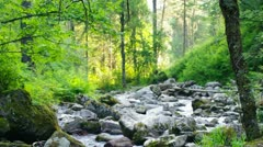 Mountain river flowing down through the summer forest Stock Footage
