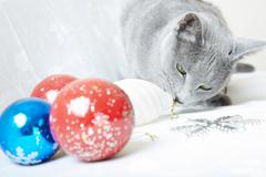 cat with christmas baubles - stock photo