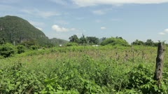 Typical cuban landscape Stock Footage