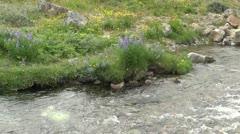 Greenland Qaqortoq stream detail Stock Footage