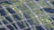 Fish under mesh nets; 2 Stock Footage