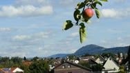 Apple on tree with panoramic view Stock Footage