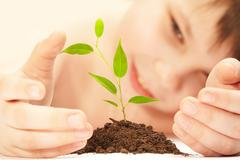 Stock Photo of the boy observes cultivation of a young plant.