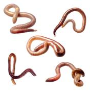 Earth worm Stock Photos