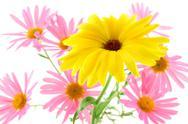 Sunny yellow flower Stock Photos