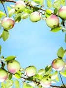 Apples - frame Stock Photos