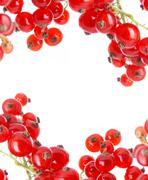 Stock Photo of fresh currant