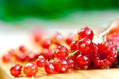 currants - stock photo