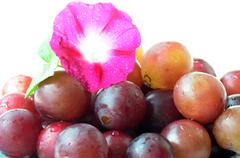 Grapes with a flower Stock Photos