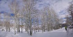 Panorama - bare winter aspens with snowshow hikers Stock Photos