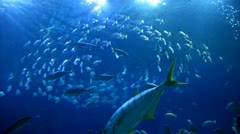 Blue ocean underwaters with fishes Stock Footage
